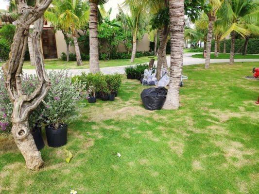 Dịch vụ thiết kế và thi công cảnh quan khu sinh thái, resort nghỉ dưỡng