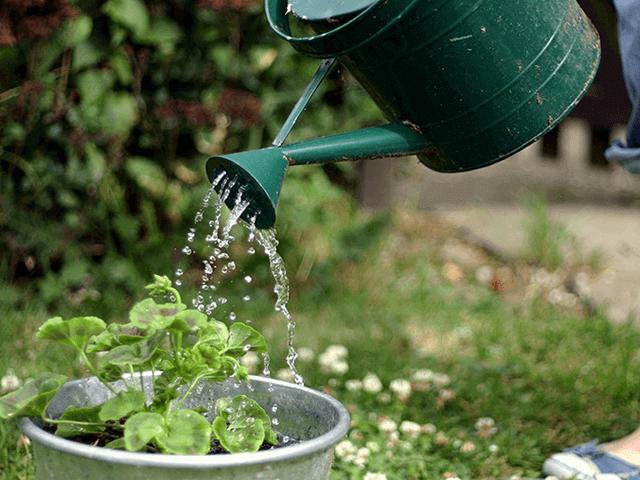 9 Cách bảo vệ và chăm sóc cây sống qua mùa nắng nóng   Quang Cảnh Xanh