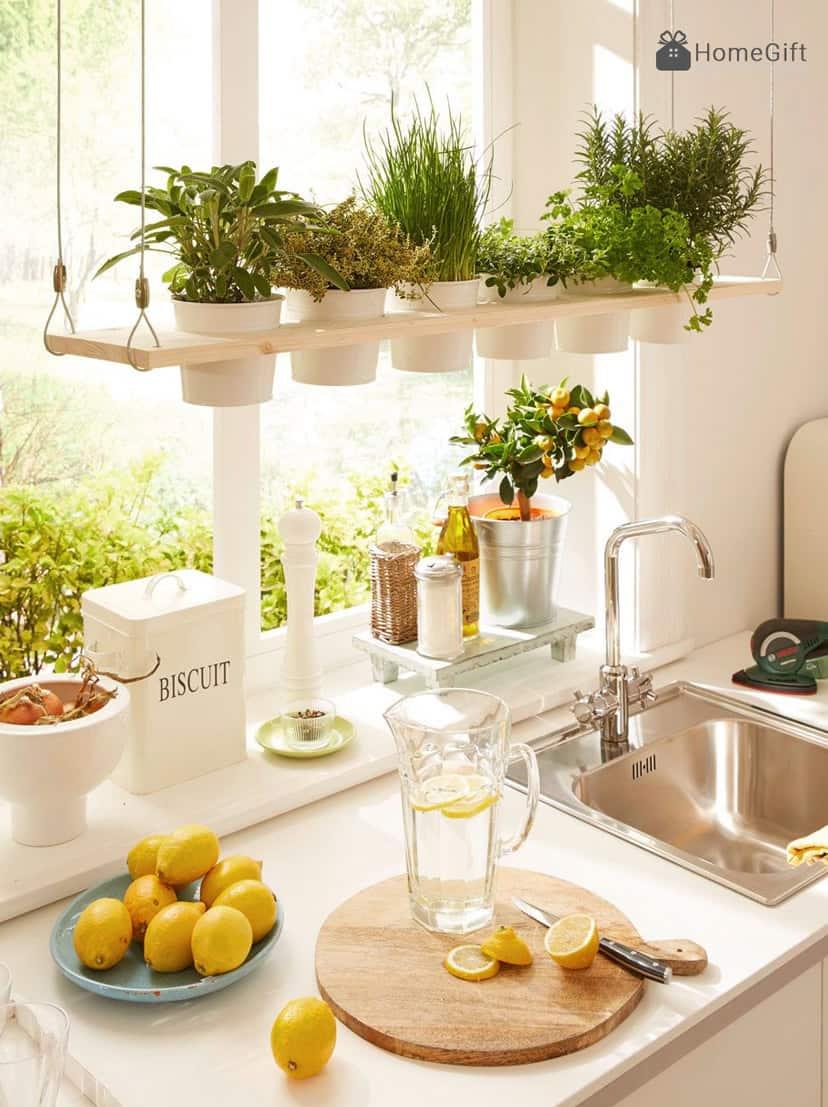vị trí đặt cây cảnh trong nhà - phòng bếp